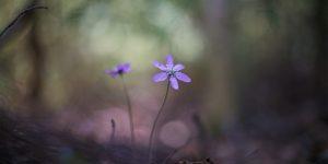 bloemetjeinbos